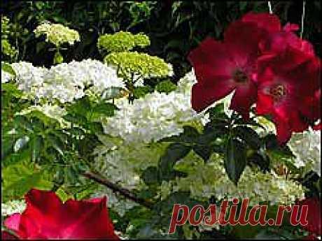 G Дайджест сайтa Gardenia.ru Номер 366