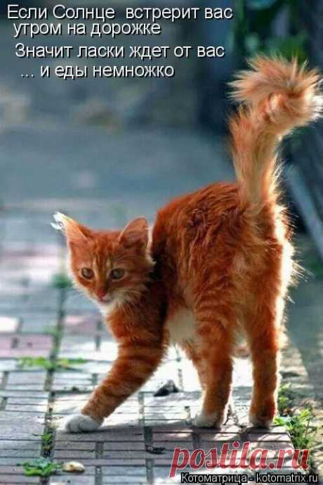 Котоматрица: Мои котоматрицы - Свежак