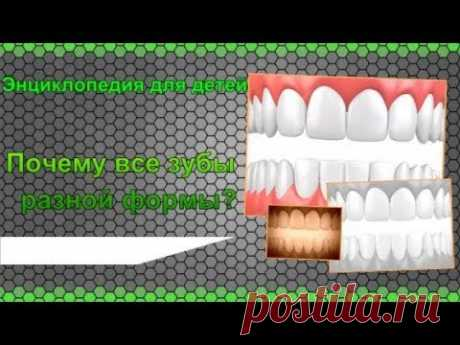 Все зубы разной формы Почему? Энциклопедия для детей - YouTube