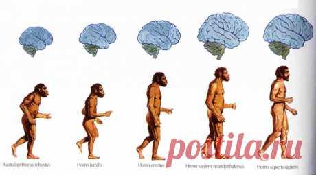 Homo culturalis: какой он - современный культурный человек? Итак, каким же набором качеств должен обладать человек, чтобы его можно было назвать достойным членом высокоразвитого общества?