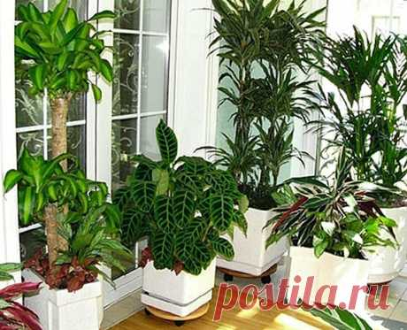 Бабушкины советы по уходу за комнатными растениями | Домовенок | Яндекс Дзен