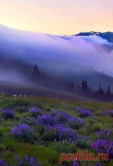 Карпаты. Сиреневый туман. Красиво.