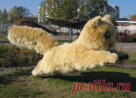 В городе Абакан собрали котенка из пушистых стебельков дикого ячменя