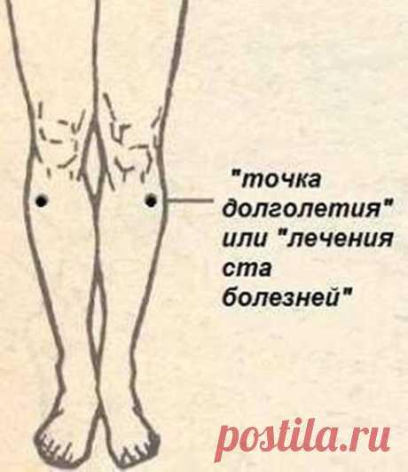 Точка долголетия - под вашим коленом.