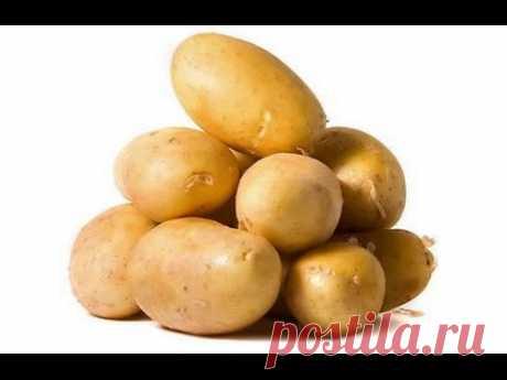 #Вареная#картошка. Очищаем без хлопот:) #boiled #potatoes:) - YouTube