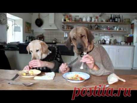 Собаки за столом / Видеохит - лучшее видео интернета