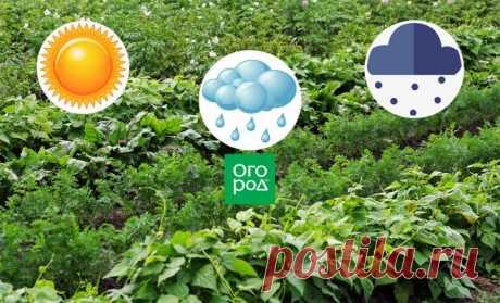Как спасти урожай от погодных катаклизмов: 4 стратегии для любой погоды | Почва и плодородие (Огород.ru)