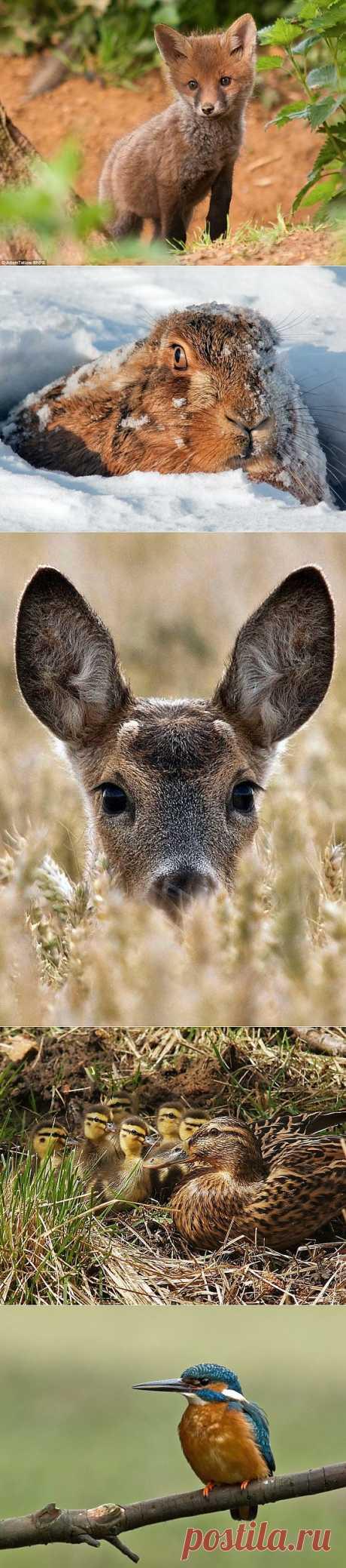 Фотографии животных от британского егеря Адама Татлоу | В мире интересного
