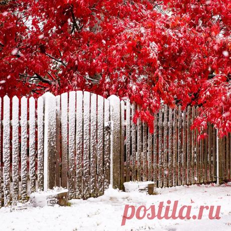 Rojo y blanco.