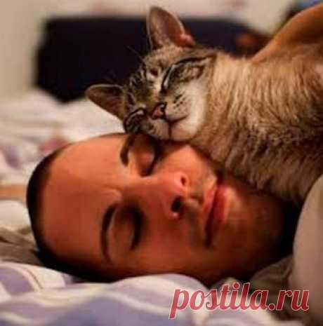 Почему кот спит на человеке: что означают его позы и выбранное место - interesno.win