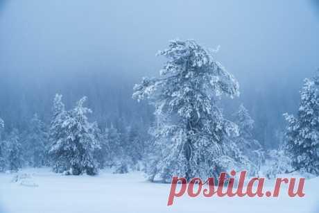 «Ледяной великан» Сумерки в заснеженном лесу Лапландии. Автор фото – Юрий Столыпин: nat-geo.ru/community/user/197496