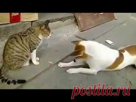Angry Cats VS Dogs Funny Compilation 2017 !!! - YouTube