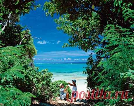 Окинава нисколько не похожа на свою приемную мать – Японию. Здесь не жалуют суши, сакура расцветает зимой, вместо садов камней – пляжи и пальмы, а ее обитатели живут по 100 лет, оставаясь детьми в душе.