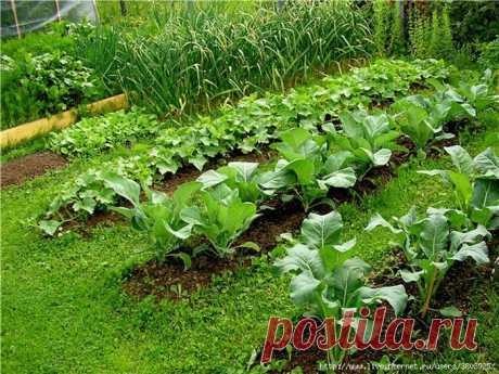 Тридцать семь хитростей для садоводов и огородников