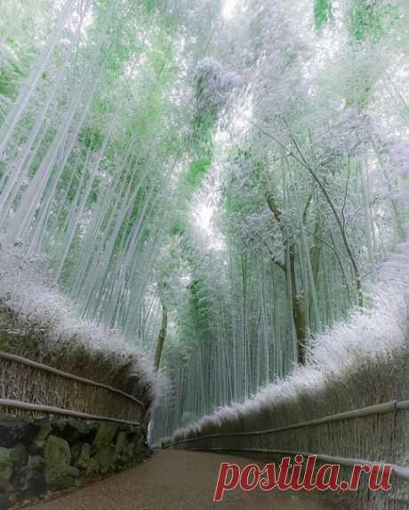 Лес в Киото, Япония