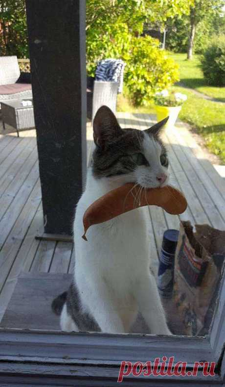 «Аменя тыпокормил?»: 10+ котов, лишивших своих хозяев завтрака. Ридус