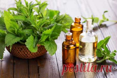 Мятное масло для волос: мелисса и перечная мята для роста