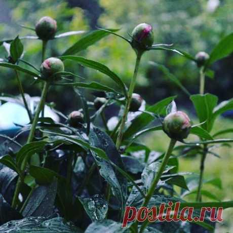 Photo by Dilijan🍒🍒🍒🌻🌻🌻💋💋💋⚘⚘⚘💥💥💥🍒🍒🍒 on September 22, 2020. На изображении может находиться: растение, на улице и природа.