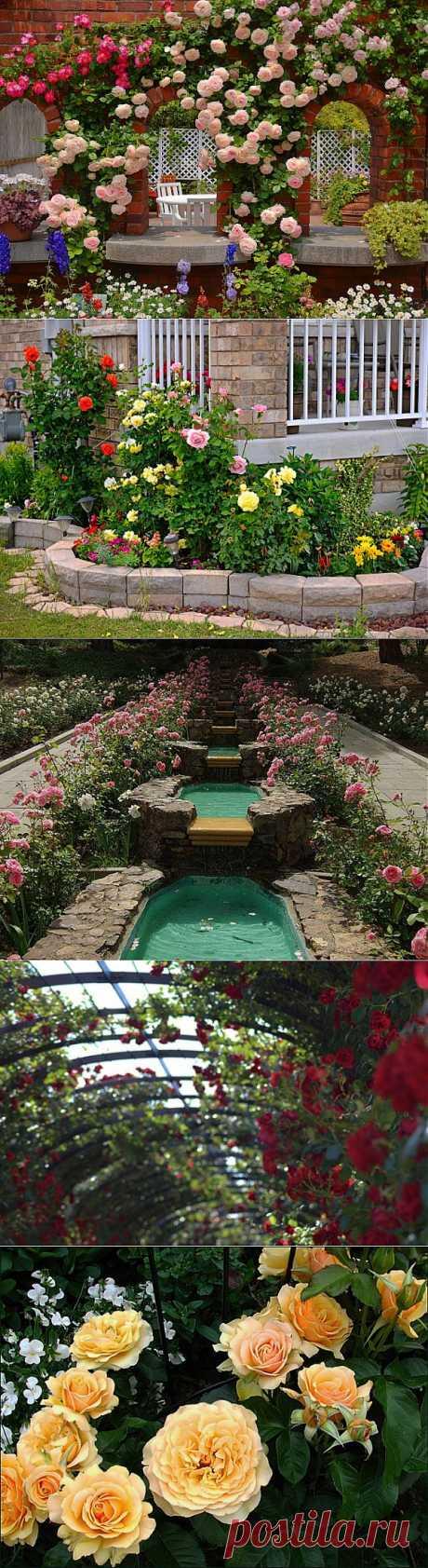 Лучшее украшение для сада: розарий | Наш уютный дом