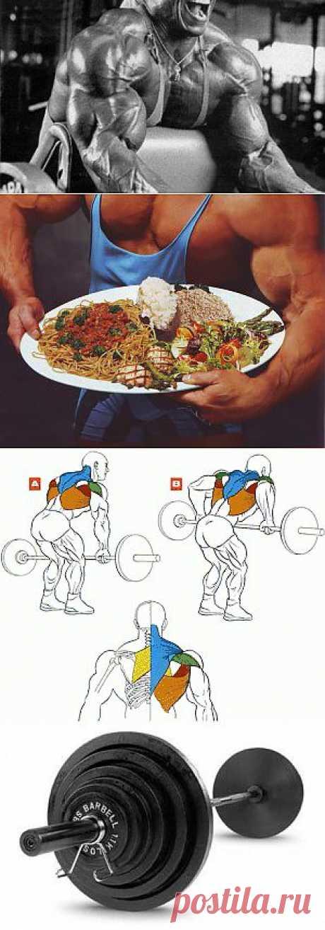 Фитнес, Бодибилдинг, Здоровье | Sport My Way