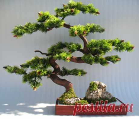 бонсай дерево - Поиск в Google
