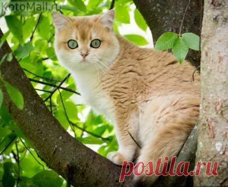 Совиный кот:)