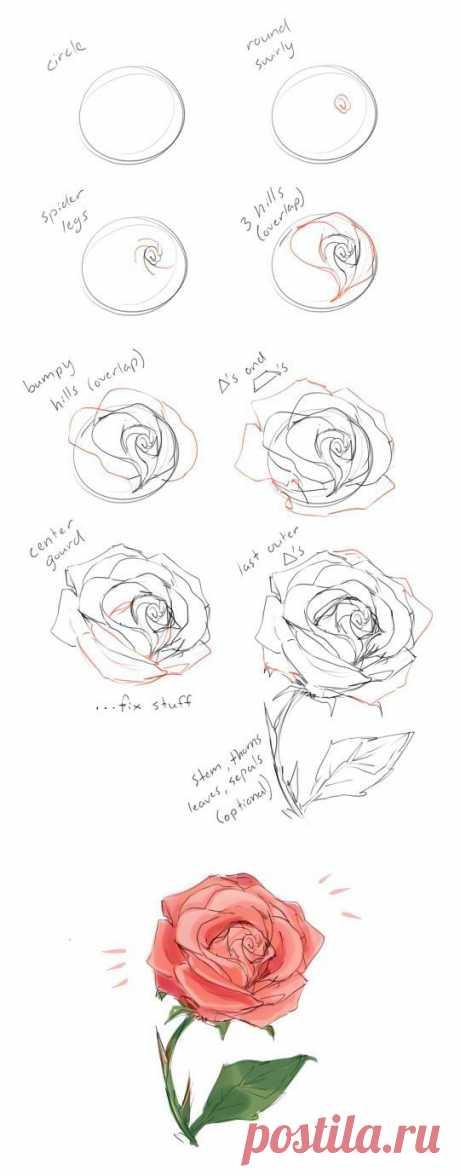Рисунки карандашом для начинающих: цветы поэтапно - Ladiesvenue.ru