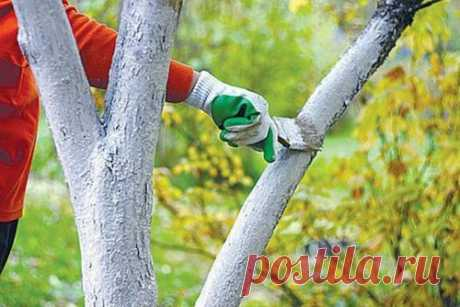 Осенняя уборка на даче, что делать в первую очередь. Работы в саду осенью Кроме того, что в саду чаще, чем на других участках, нужно бороться с осенним листопадом, вам предстоит выполнить и множество других действий.  Так как опавшие листья являются ценным компостным матери...