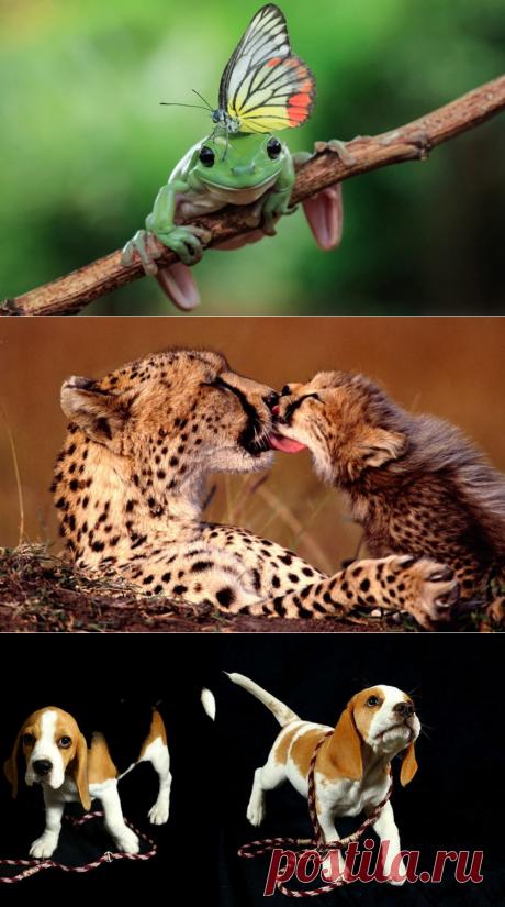 Жизнь самых интересных животных из разных уголков мира — Наука и жизнь