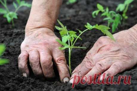 Когда сажать овощи на рассаду - расчет сроков по формуле