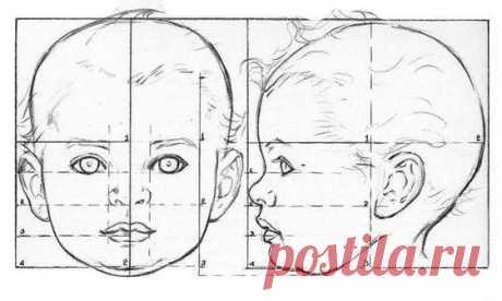 Пропорции головы: от младенчества до взрослого возраста.
