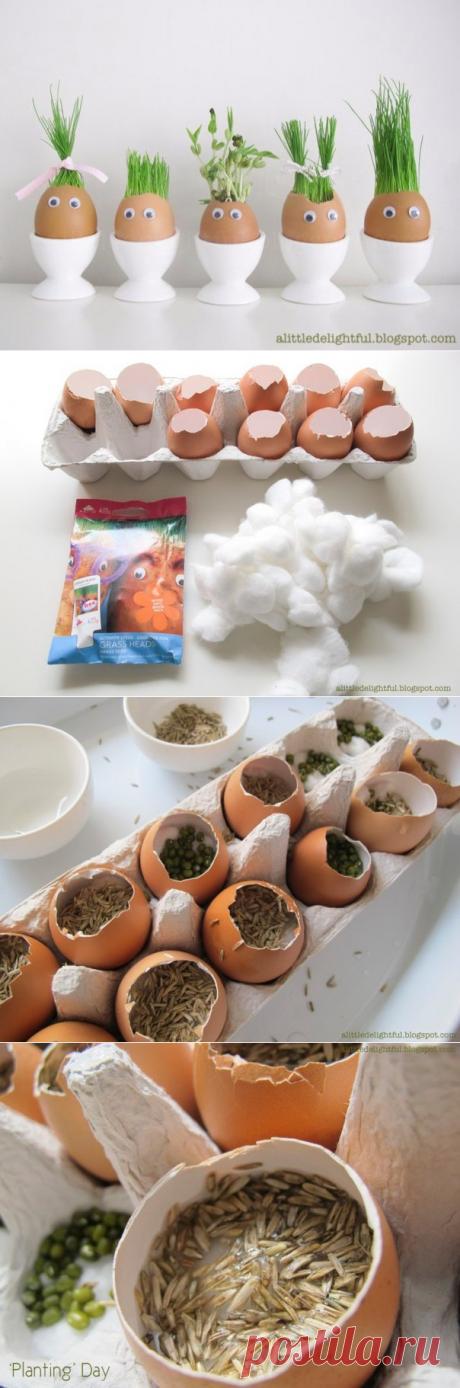 Огород в яичных скорлупках. Отличный эксперимент для ребёнка