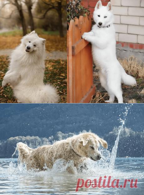 К чему снится Белая Собака — 30 значений сна для замужних и незамужних женщин, мужчин
