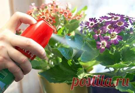 Применение системных инсектицидов для уничтожения насекомых на комнатных растениях