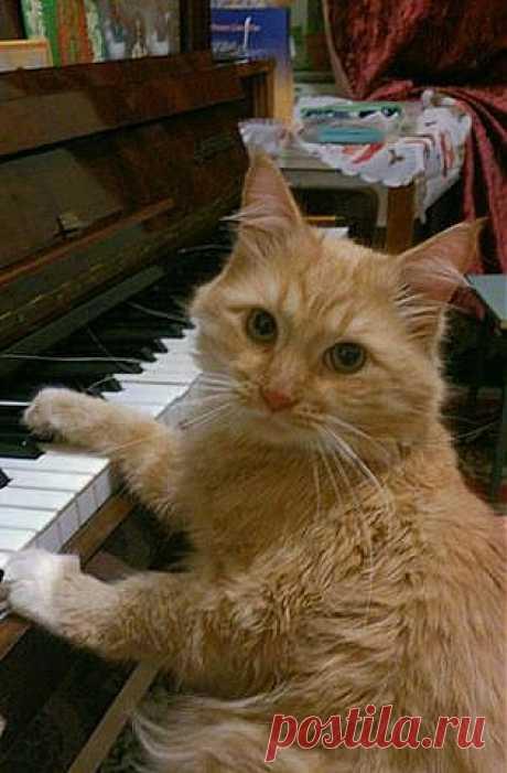 Котик- классик!
