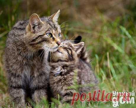 Делаем гамак для дачи своими руками Гамак на даче — излюбленное место отдыха всех членов семьи. Так расслабляет легкое покачивание, когда устраиваешься в его мягких объятиях в кружевной тени. У Вас еще нет гамака? Мы расскажем как легко сделать садовый гамак своими руками из доступных материалов. Для этого нам понадобится: полотно брезентовое черенки для лопат 2 шт бельевая капроновая бельевая веревка, 5 мм толщиной дрель, шило цыганская игла, суровые нитки лак масляный или олифа люверсы…