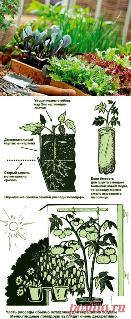 Советы Павла Траннуа как выращивать рассаду — 6 соток