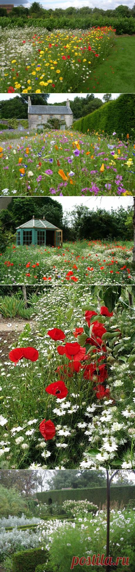 Сады полевых цветов. Цветущий луг. Опять англичане что-то придумали | Карельские Дачники | Яндекс Дзен