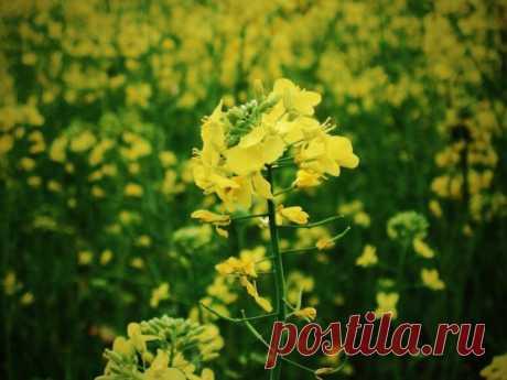 Что я делаю осенью, чтобы по весне не было сорняков на грядках | Блог Палыча | Яндекс Дзен