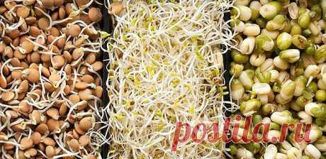 Проростки семян продляют жизнь, исцеляют от рака, гипертонии болей в позвоночнике!!!