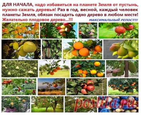 ДЛЯ НАЧАЛА, надо избавиться на планете Земля от пустынь, нужно сажать деревья! Раз в год, весной, каждый человек планеты Земля, обязан посадить одно дерево в любом месте! Желательно плодовое дерево!