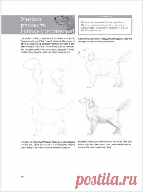 Рисуем животных: собака, волк, кошка — Поделки с детьми