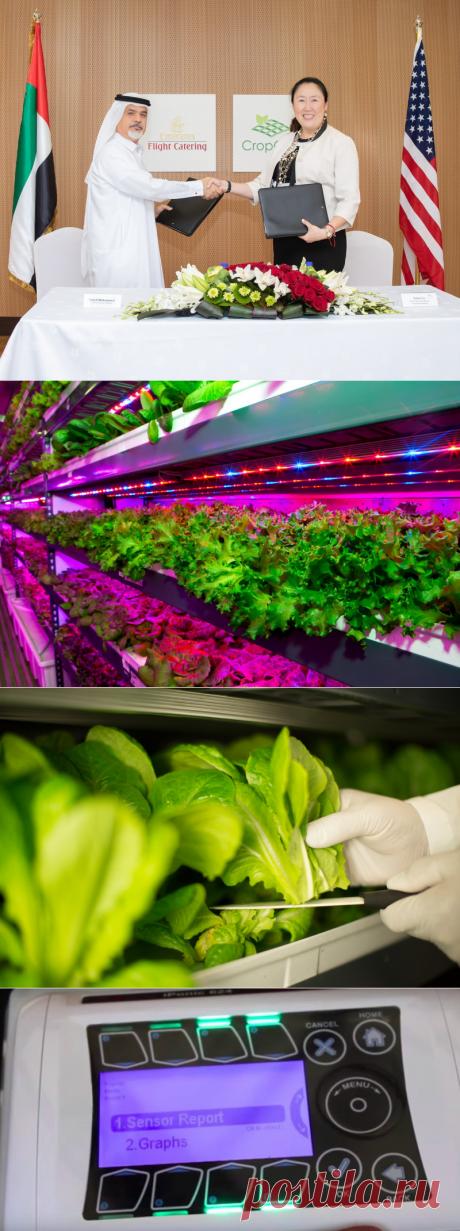 В Дубае построят крупнейшую вертикальную ферму в мире - Экологический дайджест FacePla.net