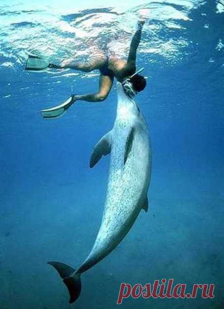 Почему дельфины спасают тонущих людей?