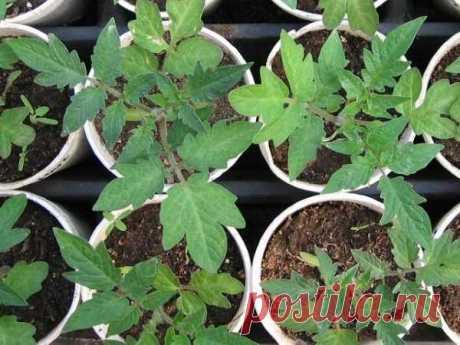Когда сеять овощи на рассаду? Сроки посева семян овощей на рассаду таблица
