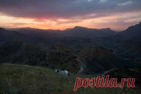 Лошадь на фоне заката в горах Дагестана, неподалеку от старинного аула Чох. Автор фото – Дмитрий Бардаков: nat-geo.ru/community/user/222190/