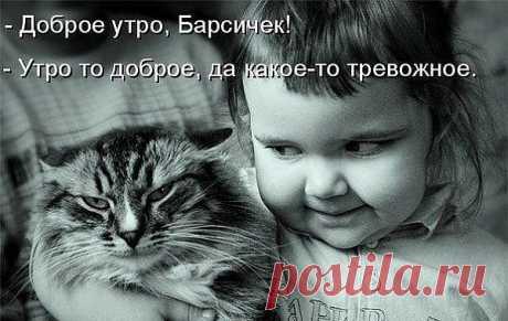 Девочка и котэ