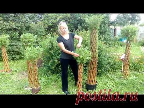 Уход за живыми плетеными деревьями - Часть 1