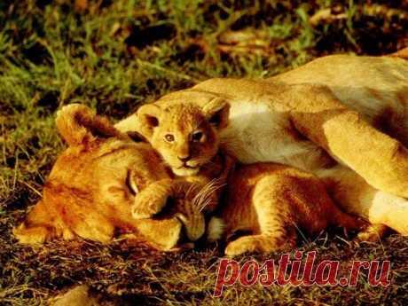Мама спит, а играть охота....