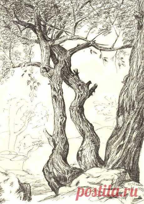 Дерева (рисунки)